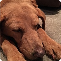 Adopt A Pet :: Charlie and Hailey - New Canaan, CT