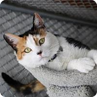 Adopt A Pet :: Molly - Yucaipa, CA