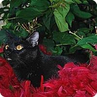 Adopt A Pet :: Wasabi FE1-8427 - Thibodaux, LA