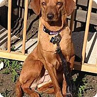 Adopt A Pet :: Penny - Plainfield, IL