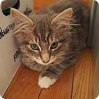 Adopt A Pet :: Tracy - Bedford, MA