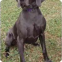 Adopt A Pet :: Cooper **ADOPTED** - Eustis, FL