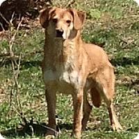 Adopt A Pet :: Daxx - New Philadelphia, OH