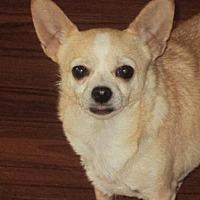 Adopt A Pet :: Taco - Centreville, VA