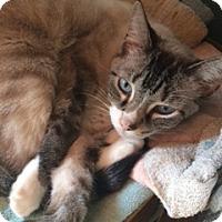 Adopt A Pet :: Ella - Woodstock, VA