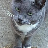 Adopt A Pet :: Busta - Sacramento, CA