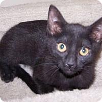 Adopt A Pet :: K-Guffey3-Krystal - Colorado Springs, CO