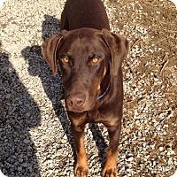 Adopt A Pet :: Breck - New Richmond, OH