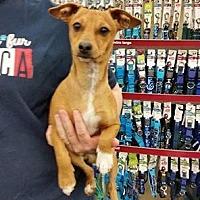 Adopt A Pet :: Rainy - Fresno, CA