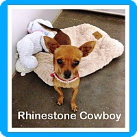 Adopt A Pet :: Rhinestone Cowboy - Shawnee Mission, KS