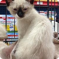 Adopt A Pet :: boomer - Redondo Beach, CA
