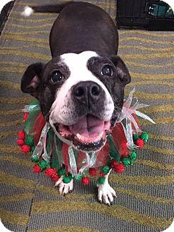 Terrier (Unknown Type, Medium) Mix Dog for adoption in Richmond, Virginia - LOLA
