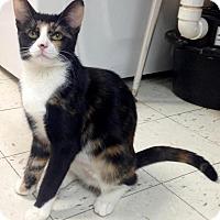 Adopt A Pet :: Brie - River Edge, NJ