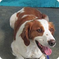 Adopt A Pet :: Sitka - LaGrange, KY