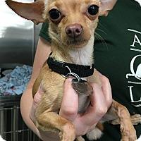 Adopt A Pet :: Newton - Oak Park, IL
