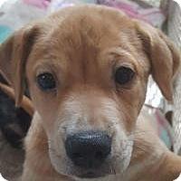 Adopt A Pet :: John John - New Smyrna Beach, FL