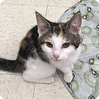 Adopt A Pet :: Lily - Warren, OH
