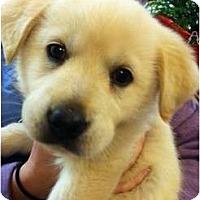 Adopt A Pet :: Morgan - Cumming, GA