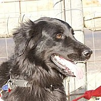 Adopt A Pet :: Sally - Newcastle, OK