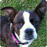 Adopt A Pet :: HAWK in TN - Wakefield, RI