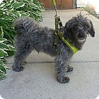 Adopt A Pet :: Bailey(ADOPTED!) - Chicago, IL