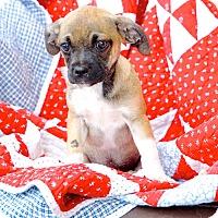Adopt A Pet :: Lexi - Homewood, AL