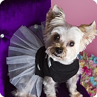 Adopt A Pet :: Emma - Baton Rouge, LA