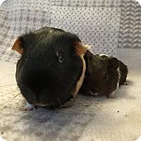 Adopt A Pet :: Patrick and Emmett McGee - Fullerton, CA