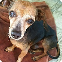 Adopt A Pet :: Fritz - Andalusia, PA