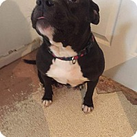 Adopt A Pet :: Amber - Weatherford, TX