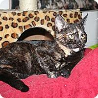 Adopt A Pet :: Penelope - Santa Rosa, CA