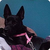 Adopt A Pet :: Nina - Hamilton, ON