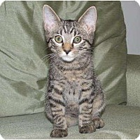 Adopt A Pet :: DICKENS-COURTESY POST - Fairfax, VA