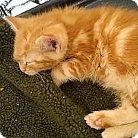Adopt A Pet :: Ajax - Sterling Hgts, MI