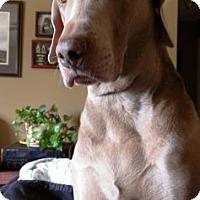 Adopt A Pet :: Stormy - Sarasota, FL
