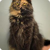 Adopt A Pet :: Pansy - Byron Center, MI