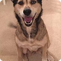 Adopt A Pet :: Gwyneth (Riley) - Orlando, FL