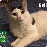Adopt A Pet :: Bella - Oakville, ON