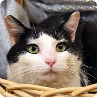 Adopt A Pet :: Lowell - Bristol, CT
