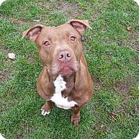 Adopt A Pet :: Tila - Indianola, IA