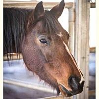 Adopt A Pet :: SWEET PEA - Ojai, CA