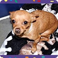 Adopt A Pet :: Chi fem - 5.1 lbs. - San Jacinto, CA