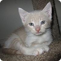 Adopt A Pet :: Eenie - Garland, TX