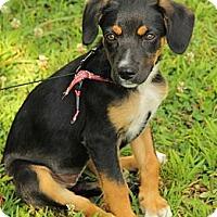 Adopt A Pet :: Celina - Staunton, VA