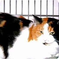 Adopt A Pet :: Sabrina - Medway, MA