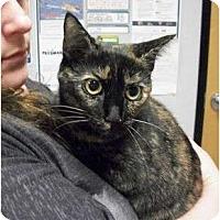 Adopt A Pet :: Isis - Reston, VA