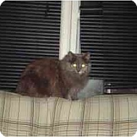 Adopt A Pet :: Abby - Milwaukee, WI