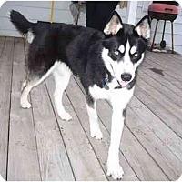 Adopt A Pet :: Zeke - Belleville, MI