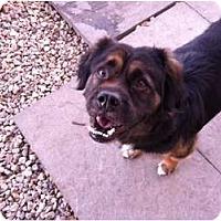 Adopt A Pet :: OSO - Dennis, MA