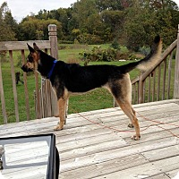 Adopt A Pet :: Trooper - Laingsburg, MI